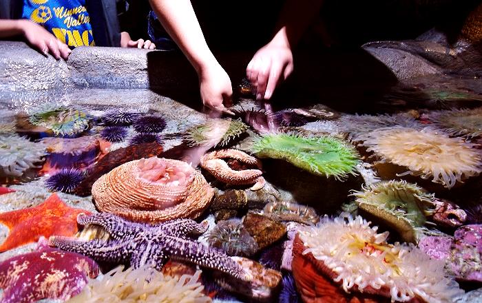 Touch Tank Aquarium of The Pacific