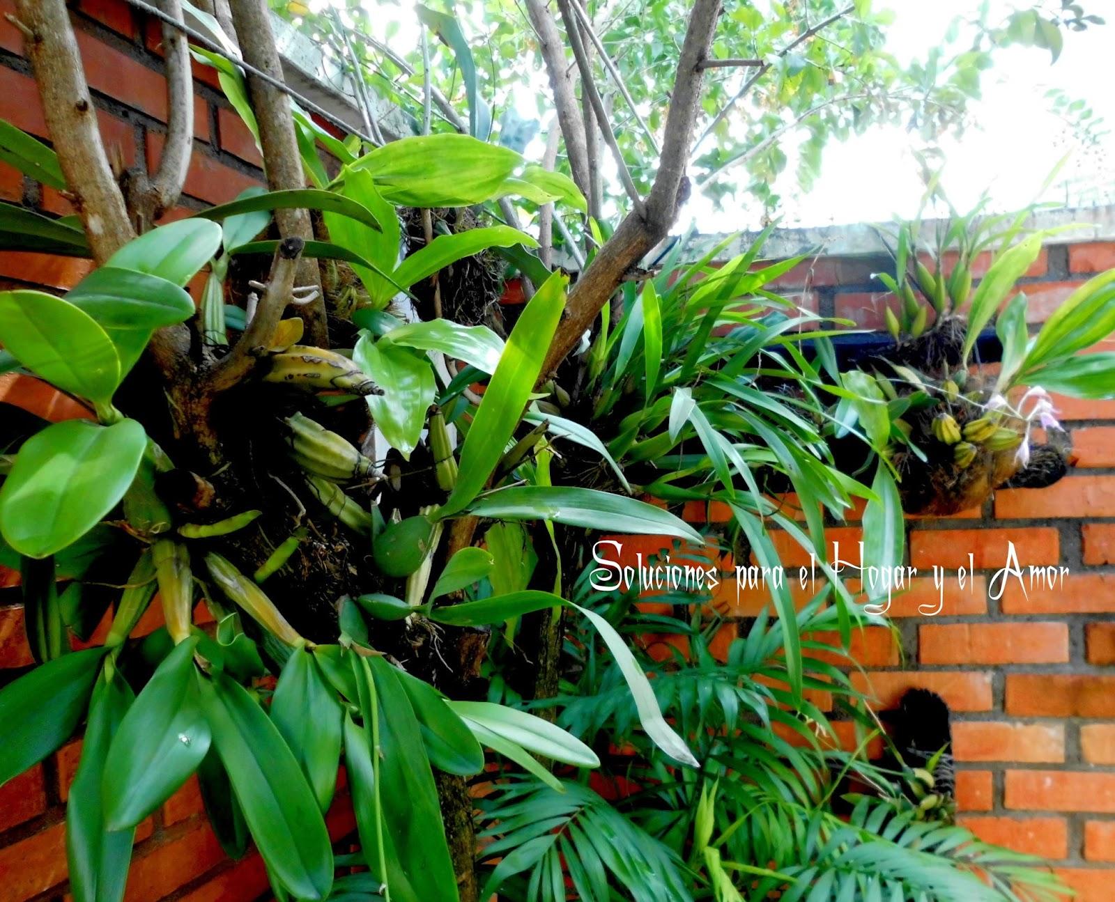 Poema de Primavera, plantas de orquideas