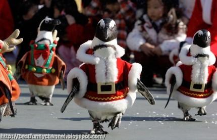 Funny Christmas penguins.