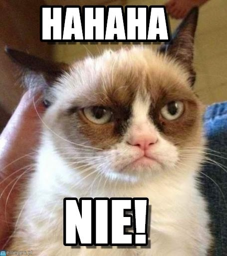 suchary: memy o kotach