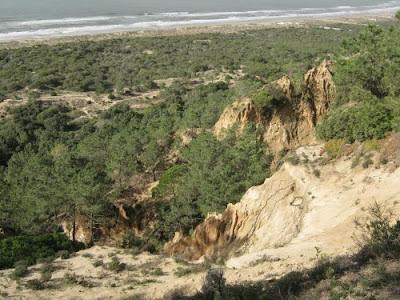 Mata dos Medos e Arriba Fóssil, Charneca de Caparica