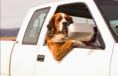 Tips On Traveling With Your Pets