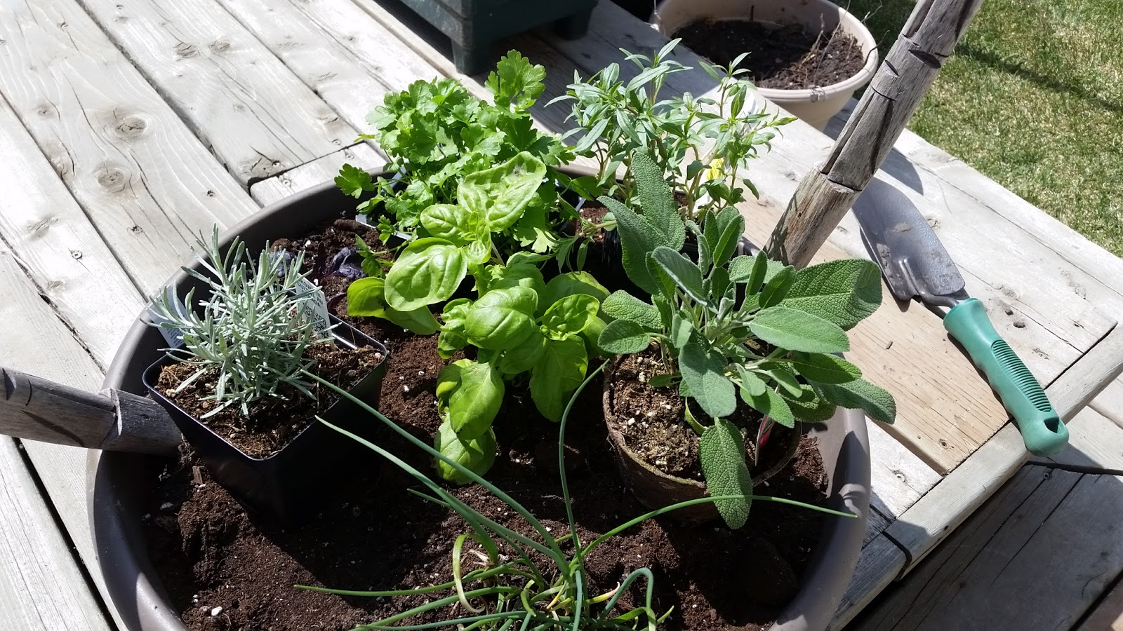 Mennonite Girls Can Cook: 'Salad Bowl' / 'Herb Bowl' Planter