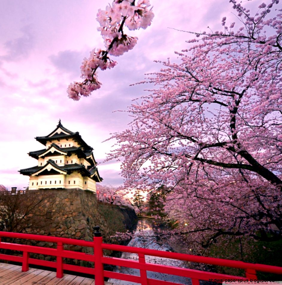 Cherry Blossoms Japan HD desktop wallpaper  High Definition