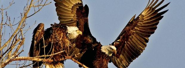 guzel kus facebook kapak resimleri+%25286%2529 35 En Güzel Facebook Kuş Kapak Resimleri indir