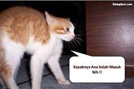 Gambar Lucu Gokil Untuk Komentar Facebook Bikin Ketawa