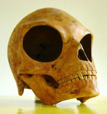 Sealand Skull, most important artifact that proves aliens exist.