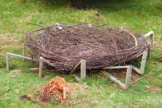 Constructed white tailed eagle nest
