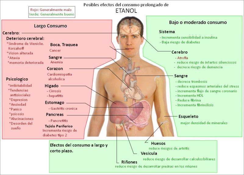 RECORRIDO DENTRO DEL CUERPO | ETANOL O ALCOHOL ETILICO