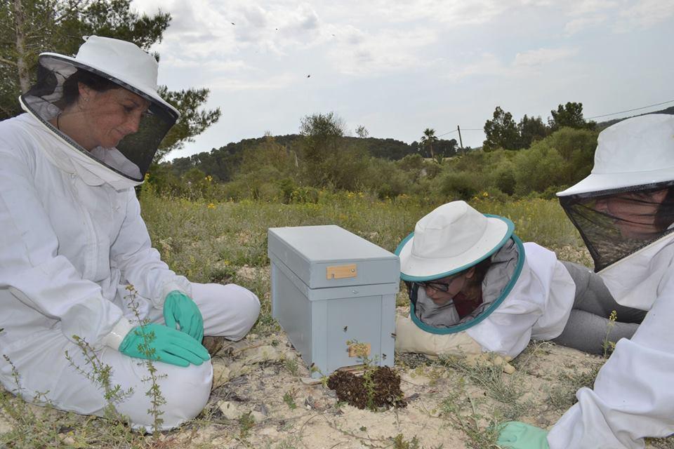 Descubre los secretos de las abejas y la apicultura
