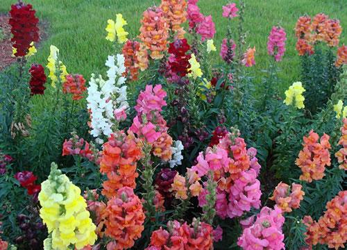flores para jardim de inverno:Decore: Plantas para Jardim de Inverno
