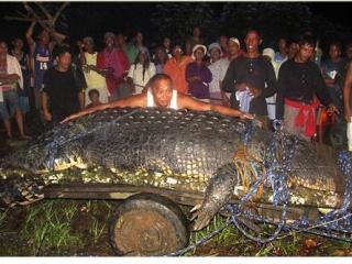 菲律賓 6米巨鱷 活捉