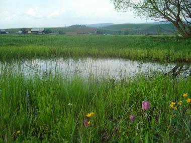La Sărătură, Peste Mureș, primăvara