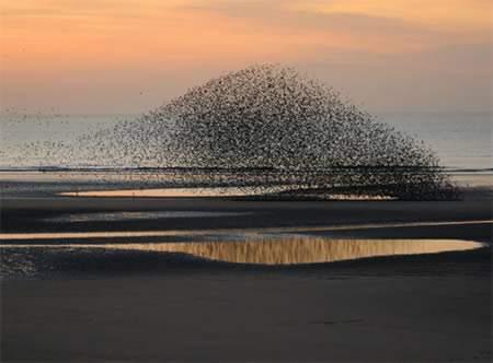formasi-burung-paling-keren-gundukan-pasir