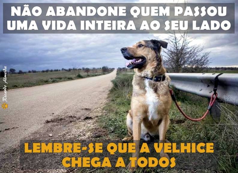 PONTA DO FOCINHO - PELO RESPEITO AOS ANIMAIS