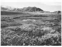 Bioma tundra di daerah pegunungan es