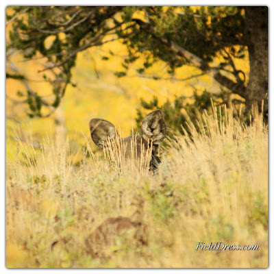 wildlife, mule deer, field dress