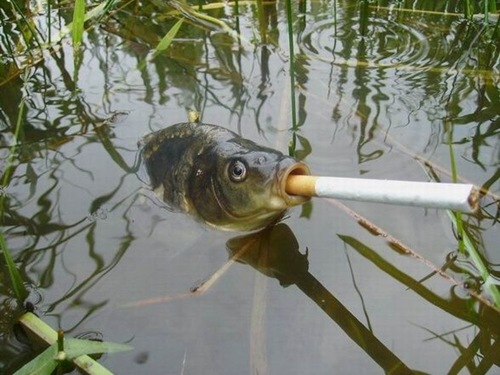 Cute funny animalz funny animal smoking best new pictures for Best fish to smoke