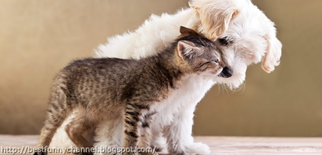 Very funny kitten and puppy.
