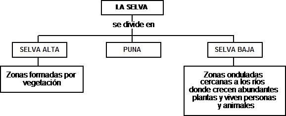 Cuentos de Don Coco: MAPA CONCEPTUAL DE LA SELVA || Cuentos ...