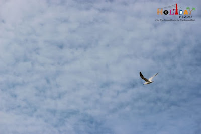 A bird taking a flight in dhanushkodi