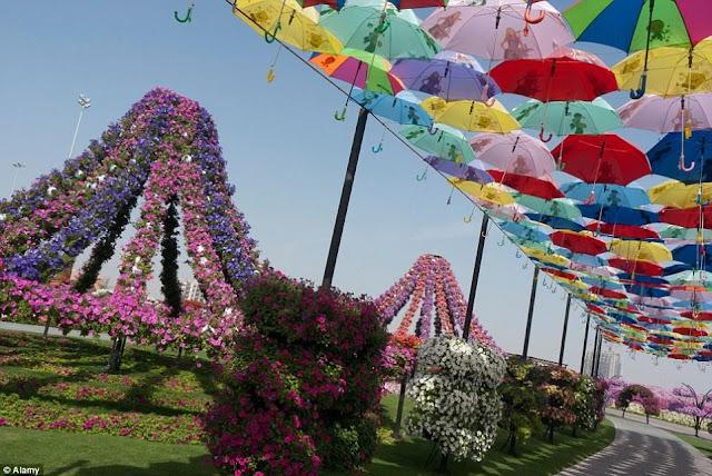 DUBAI MIRACLE GARDEN  12