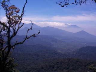 Hutan Hujan Gunung Halimun
