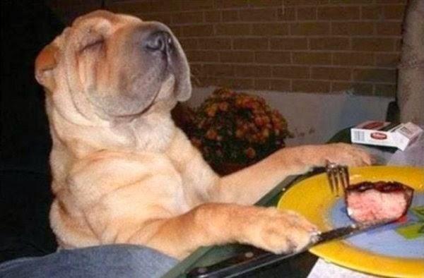 Lustige Bilder Zum Tot Lachen - BEST OF lustige funny Bilder & Pics zum totlachen Video