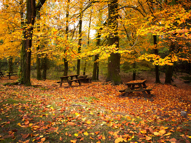 Fallen Yellow Leaves Wooden Benches Picnic Area Autumn Wallpaper