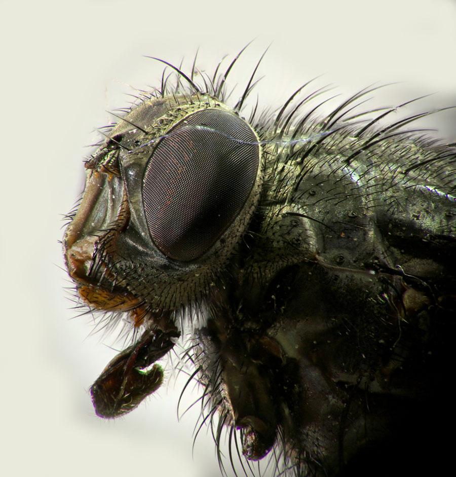 ebartworks macro close up de insectos. Black Bedroom Furniture Sets. Home Design Ideas