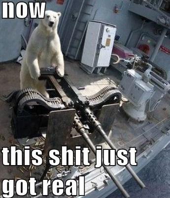 shit just got real polar bear jimmyfungus com shit just got real the best \