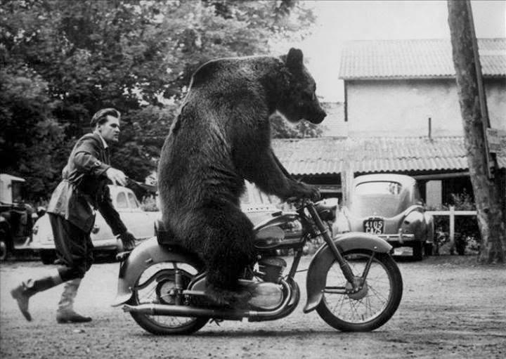 bear, bike