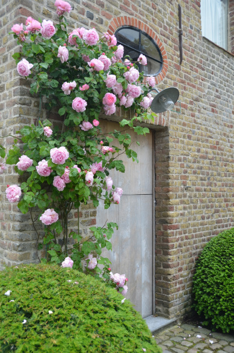 "Climbing roses, Garnier estate: ""Vaucelleshof"" image via Garnier (be) website as seen on linenandlavender.net"