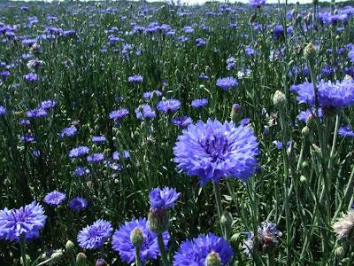 Цветок по гречески