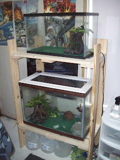 The frog's new digs!