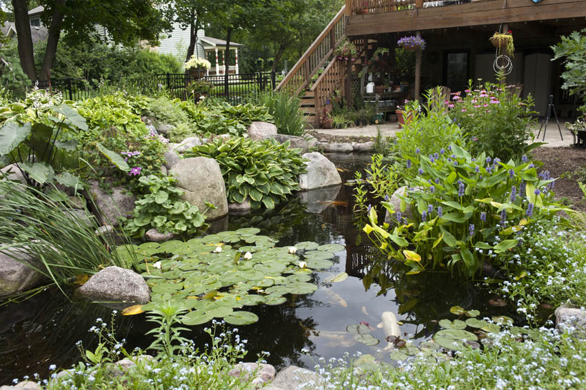 Aquascape your landscape designing your dream pond for Plants for around garden ponds