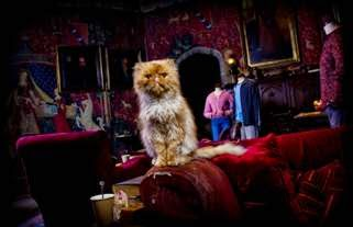 Animal Actors at Hogwarts Warner Bros Studio Tours