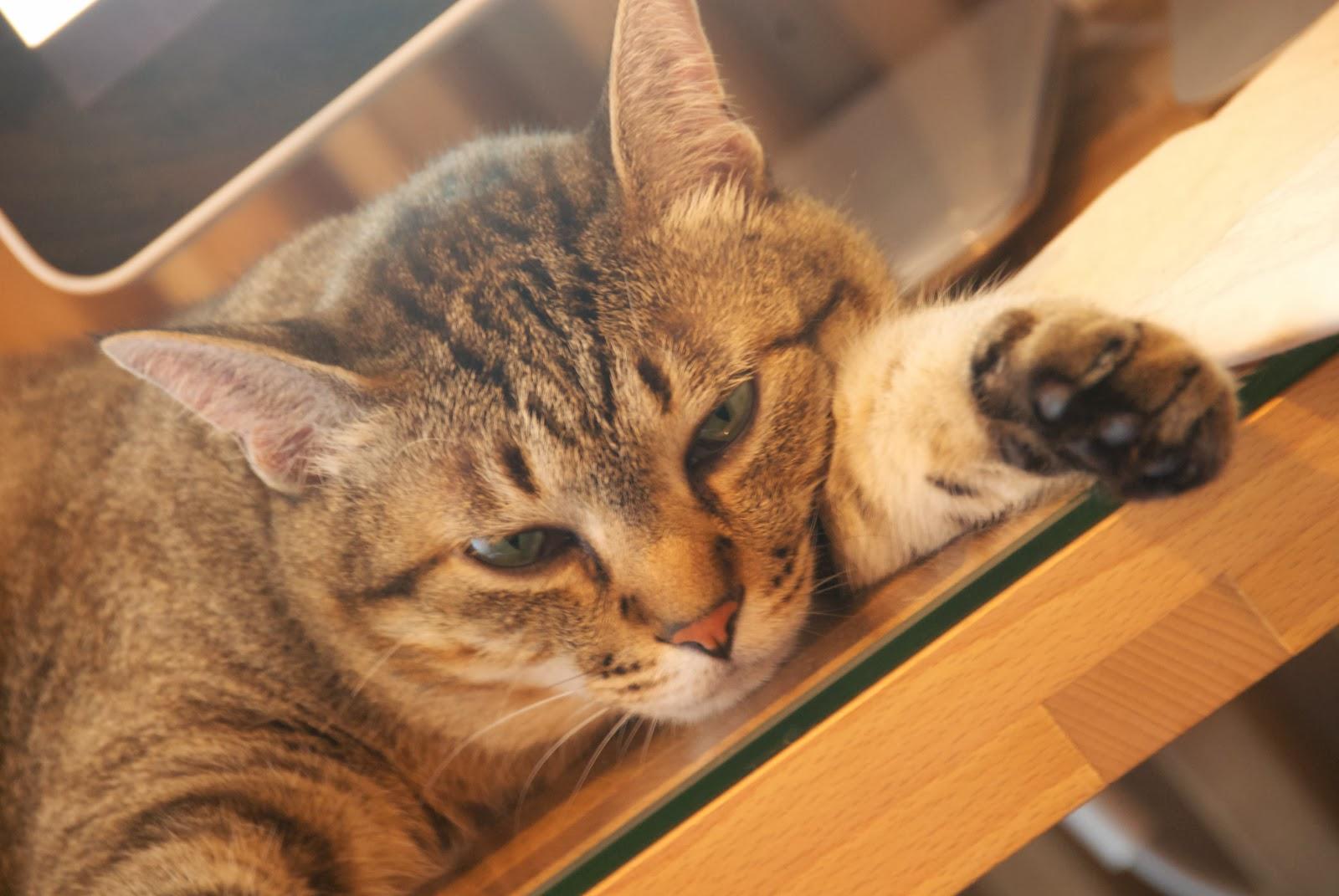 ふてくされる 猫