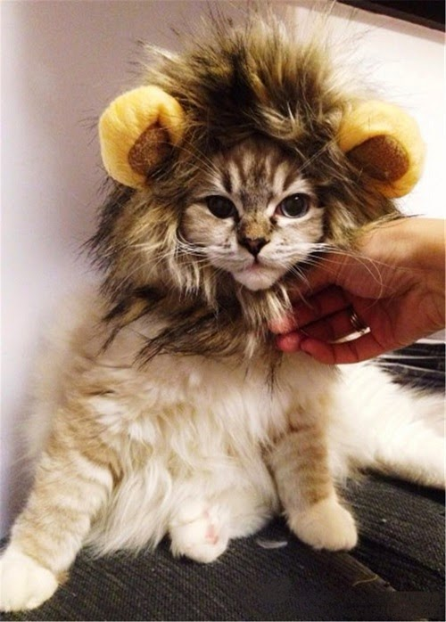 Halloween Costumes for Cats - Lion Mane Wig for Cat