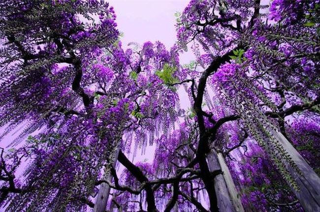 شلالات الزهور اليابانية Water_Fall_Flowers_Japan_13.jpg