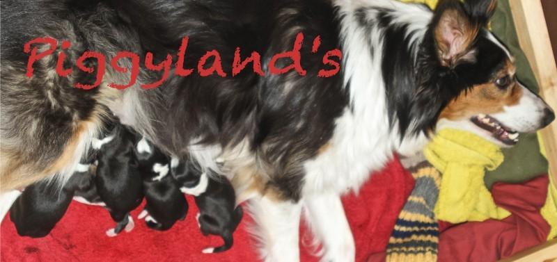 Piggyland's news