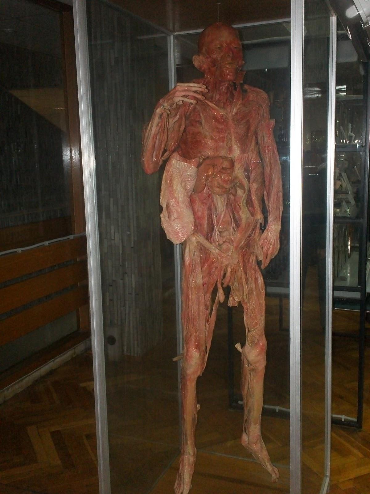 HISTORIA DE LA MEDICINA UNERG: MUSEO DE ANATOMIA. FACULTAD DE ...
