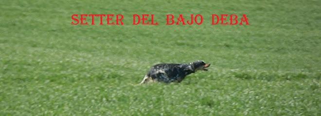 SETTER DEL BAJO DEBA