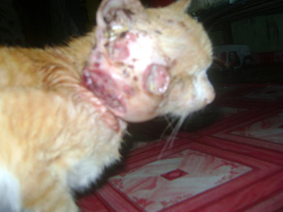 Diari Diskusi Diri Kucing Aku Mati Kerana Sporor