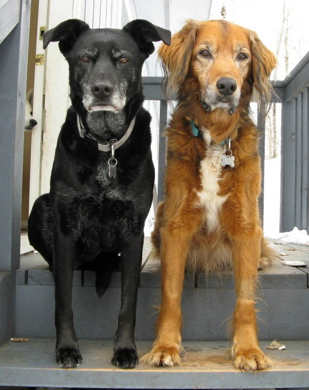dog brothers, funny animal pictures, animal photos, funny animals