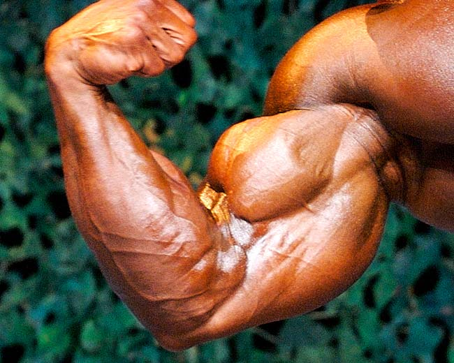 3 Steps to Do Bicep Curls For Big Ripped Arms - lose wieght fast tips