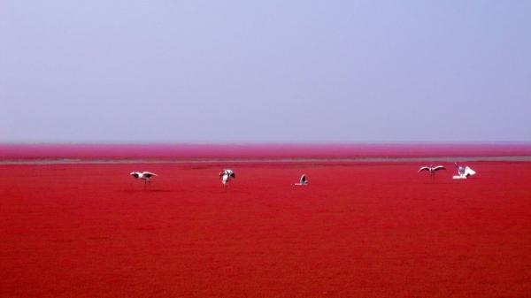 Pantai Merah Painjin