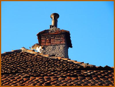 pisica pe acoperis strada republicii brasov