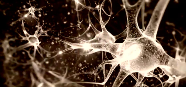 Sinir Hücreleri - Bilinçaltı - Sinan Canan