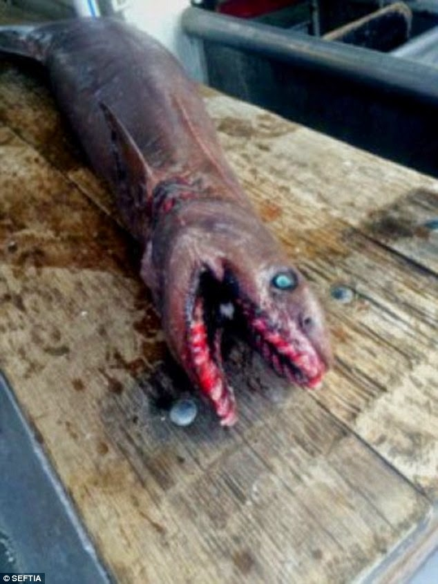 Spesies Hiu Prasejarah Ditemukan di Perairan Australia